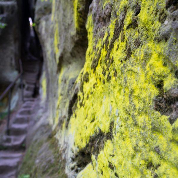Aufstieg Arnstein, Schwefelflechte und Stufen durch den Felsspalt
