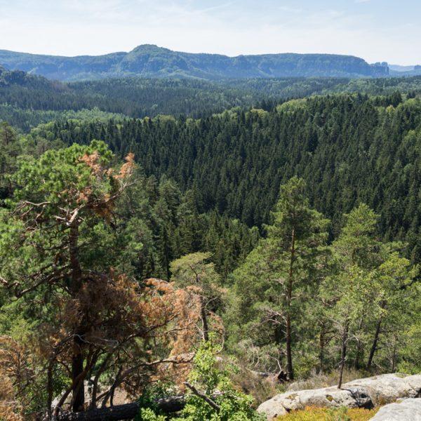 Ausblick vom Arnstein auf das dichte Waldgebiet