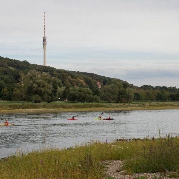 Blick vom Elberadweg in Richtung Fernsehturm