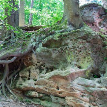 Aufstieg zur Bastei auf dem Malerweg, Sandstein und Wurzel
