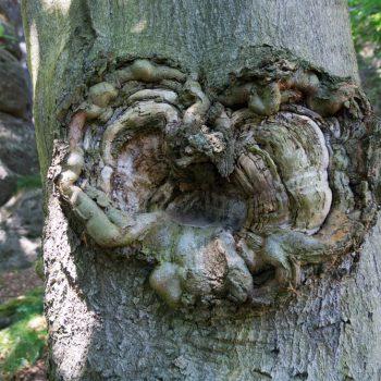 Struktur eines Baumstammes, Wanderung zur Bastei