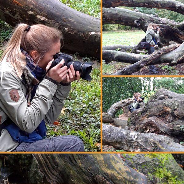Fotoserie Hängebuche im Helfenberger Park