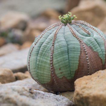 kleiner Kaktus im Sukkulentenhaus, Botanischer Garten Dresden