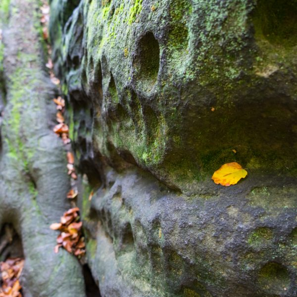 Felsen und Wurzel an der Bandaussicht