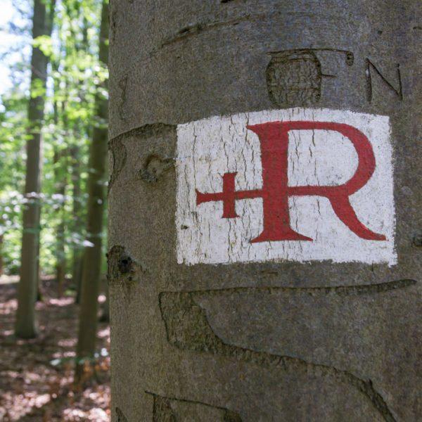 Kreuz R, historisches Wegzeichen Dresdner Heide