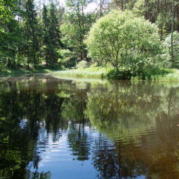 Teich an der Alten Eins, Naturdenkmal Böses Loch