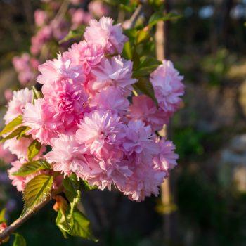 Blüten im Garten der Heidemühle, Dresdner Heide