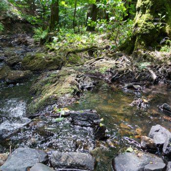 Steine am Ufer der Prießnitz, am Kellersteig