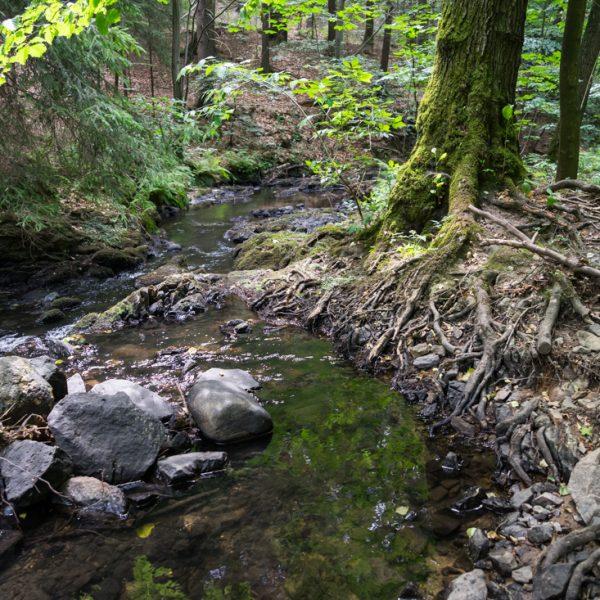 Flusslauf der Prießnitz am Kellersteig