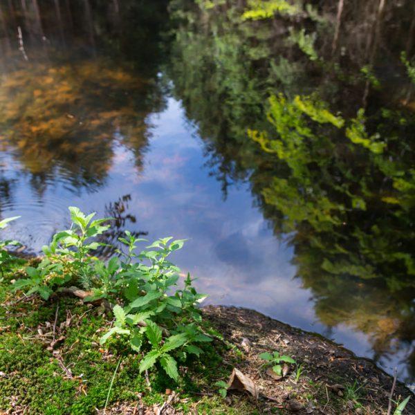 Gewässer am Wegesrand der Alten Sechs