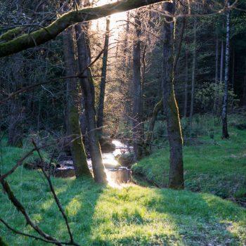Gegenlicht an der Prießnitz, am Weißiger Weg
