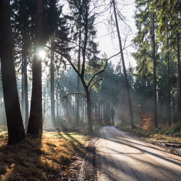 Waldlauf auf dem HG-Weg, Dresdner Heide