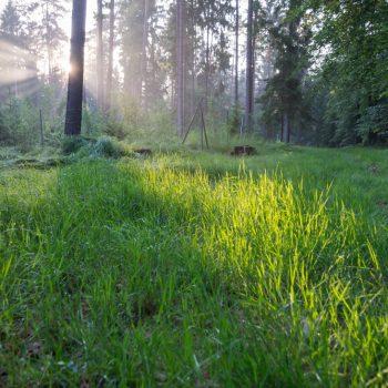 Abendlicht in der Dresdner Heide