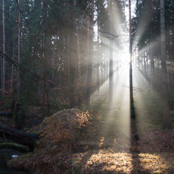 Lichteinfall an der Prießnitz, Waldlauf Dresdner Heide