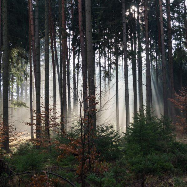 Waldlauf und Lichtstimmung in der Dresdner Heide