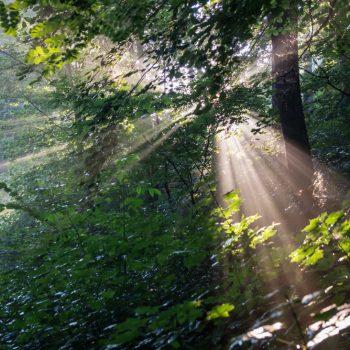 Lichtstimmung nach dem Regen, Dresdner Heide