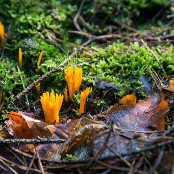 Pilze und Moos in der Dresdner Heide