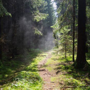 dampfende Erde nach dem Regen, Dresdner Heide