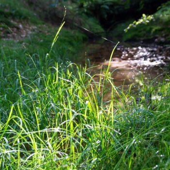 Grashalme im Gegenlicht, Dresdner Heide