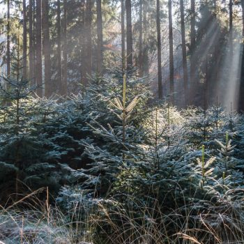 Wanderung im Winterwald, Panorama