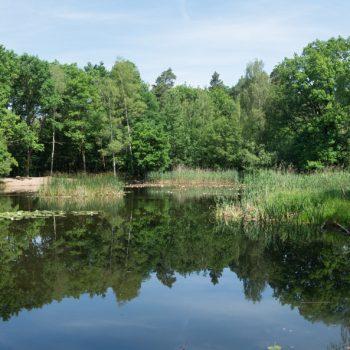 Silbersee in der Dresdner Heide