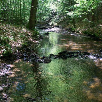 Am Flusslauf der Prießnitz