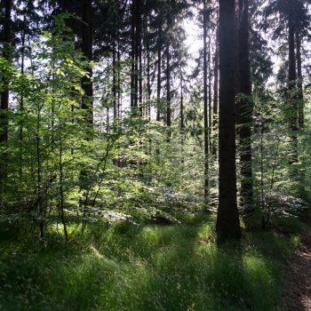 Auf dem Ochsensteig, Dresdner Heide