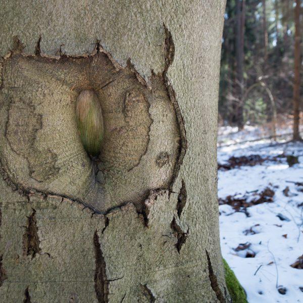 Struktur in der Baumrinde, Dresdner Heide