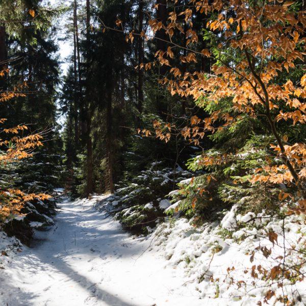 Winterstimmung in der Dresdner Heide