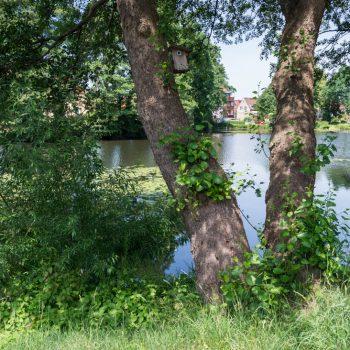 Am Ufer des Friedersdorfer Mittelteiches, Weixdorf