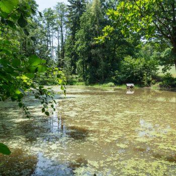 Teich im Seifersdorfer Tal, Liegau-Augustusbad