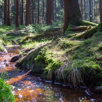 rotbraunes Wasser, Haarweidebach am Stausee