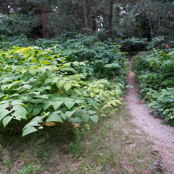 Einstieg in den MTB-Trail, Abzweig vom Waldweg Gabel