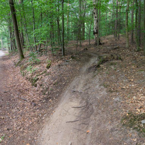 MTB Abfahrt trifft auf den Waldweg Kannenhenkel, Singletrail Dresdner Heide