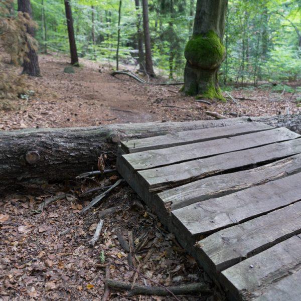 Sprungschanze über einen ungestürzten Baumstamm, mit dem MTB in der Dresdner Heide