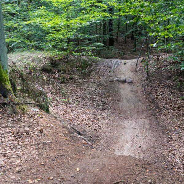Singletrail führt durch eine Senke, Mountainbiken Dresdner Heide