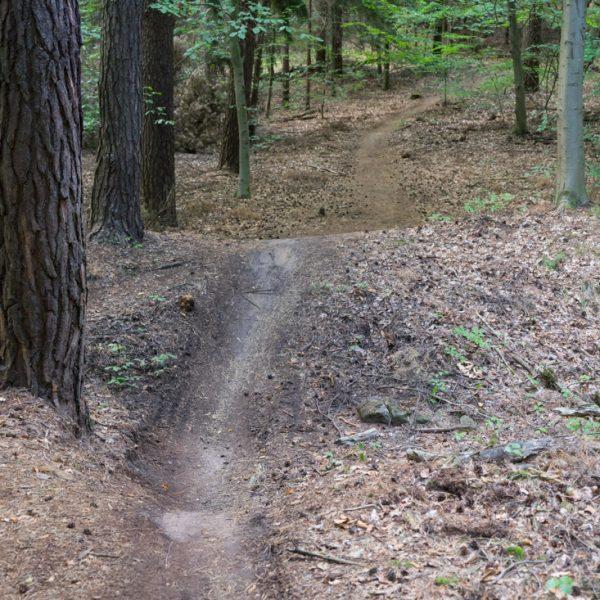 Singletrail kurz vor Erreichen des O-Weg, Mountainbiken Dresdner Heide