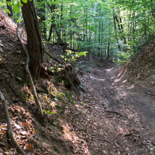 MTB Abfahrt auf dem Diebsteig in das Tal der Prießnitz
