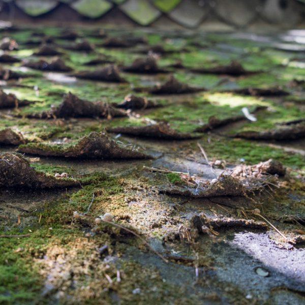 verwittertes Dach der Schutzhütte, Dresdner Heide