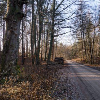 Auf dem HG-Weg, Wanderung Dresdner Heide