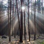 Lichtstimmung in der Dresdner Heide