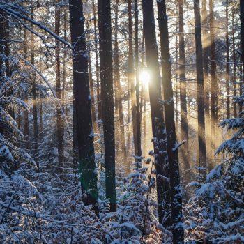 Sonnenuntergang im Winter, Dresdner Heide