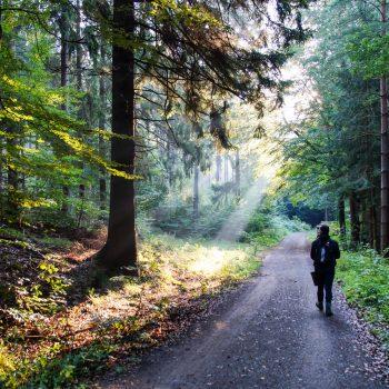 Morgenstimmung auf dem Neuen Weg, Dresdner Heide