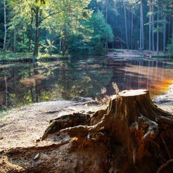Blick auf den Stausee mit Schutzhütte, Dresdner Heide