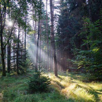 Sonnenstrahlen am Morgen, Wanderung Dresdner Heide