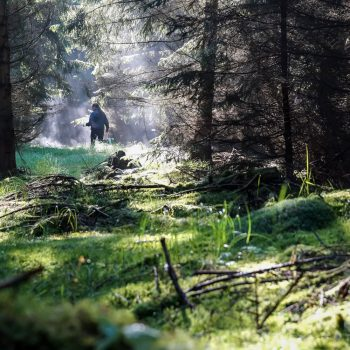 Pilzsuche im Unterholz, Morgenlicht in der Dresdner Heide