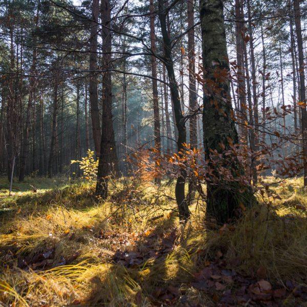 Bäume und Gräser im Gegenlicht, Wanderung Dresdner Heide
