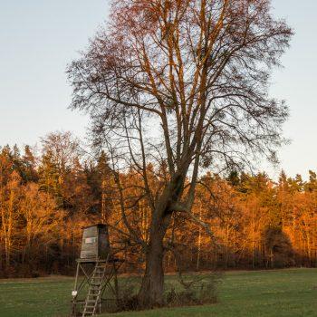 Tanzzipfelwiese im Abendlicht, Wanderung Dresdner Heide
