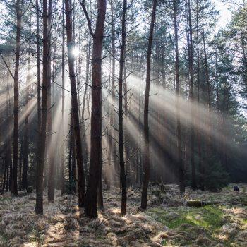 Sonnenstrahlen in der Dresdner Heide