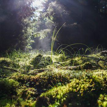 Dampfendes Moos im Morgenlicht, Dresdner Heide